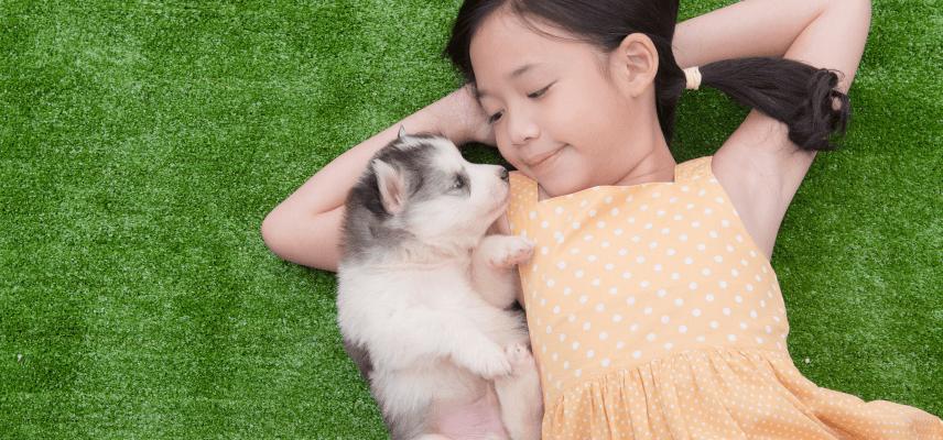 初めて犬を飼う方へ